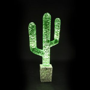 cactus fruits lumineux jardin