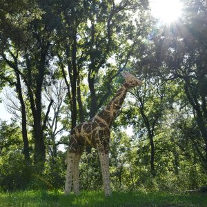 girafe_02