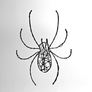 araignée fond clair